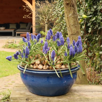 Blomstring pottery blue low medium